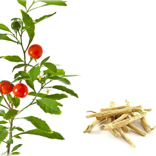 Ashwagandha (Withania) in polvere