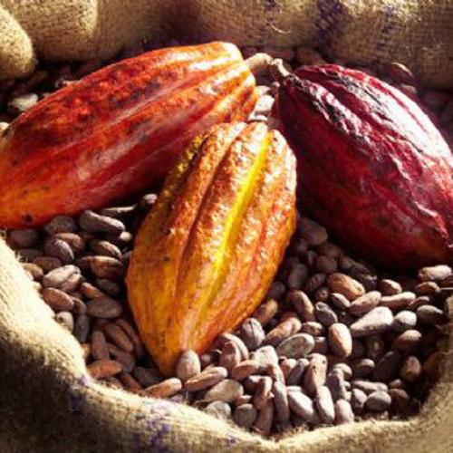 Fave di Cacao Criollo intere crudo
