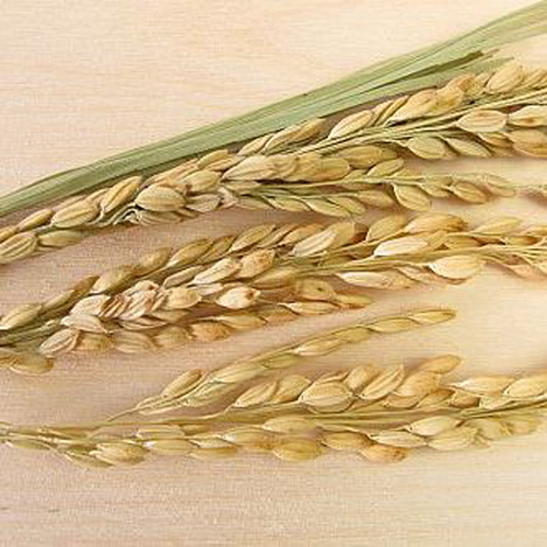 Pasta di riso Rigatoni