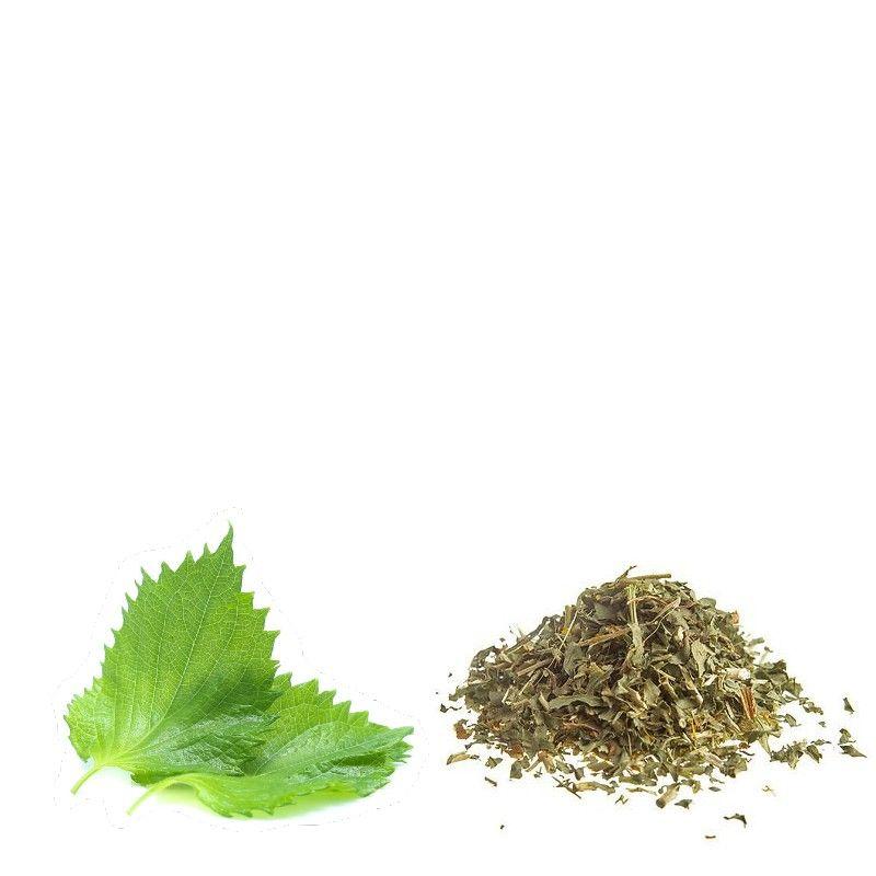 Perilla foglie in taglio tisana