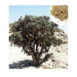 Boswellia serrata in polvere