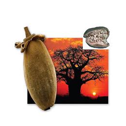 Frutto del baobab in polvere