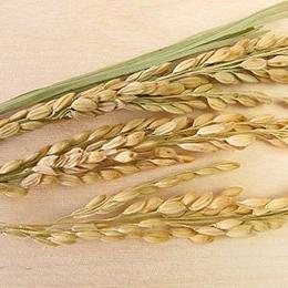 Pasta di riso Fusilli
