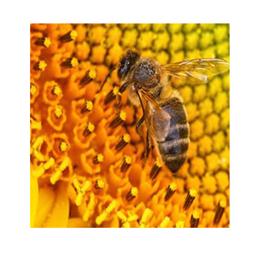 Polline Naturale dei Fiori
