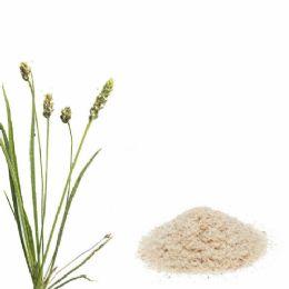 Psillio cuticola semi in polvere